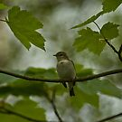 Do you know what bird this is? by laurav