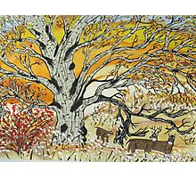 Whitetails and White Oak Tree Photographic Print