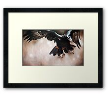 """Alight - The Wedge-tailed Eagle"" Framed Print"