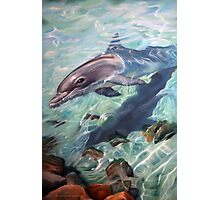 """Inquisitive - The Bottlenose Dolphin"" Photographic Print"