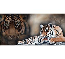 """Panthera Tigris - Bengal Tiger"" Photographic Print"