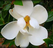 MAY FOR MAGNOLIA by Claire Moreau
