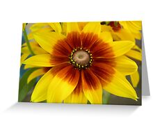 African Daisy Greeting Card
