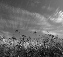 Nature in black and white II by Anne Staub