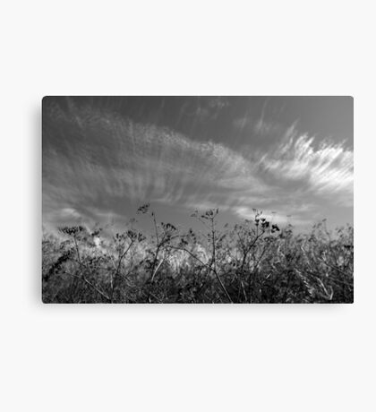 Nature in black and white II Canvas Print