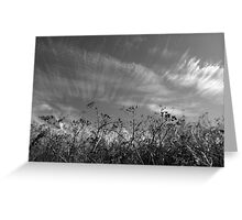 Nature in black and white II Greeting Card