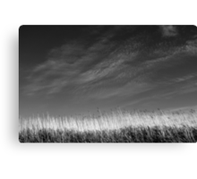 Nature in black and white III Canvas Print