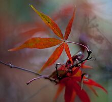 Leaves Abstract by mikereid