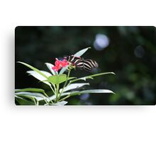 Striped Butterfly on Red Flowers Canvas Print