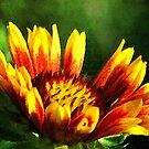 Arizona Sun Flower in the Garden by William Martin