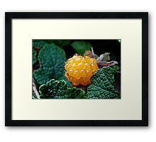 Golden Jewel Among the Vines Framed Print