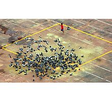 National Geographic Pigeons Photographic Print