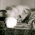 Looking Cute by Lou Wilson