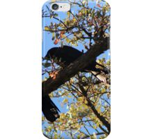 Two Ravens iPhone Case/Skin