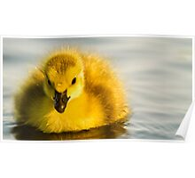 Cute Duckling Poster