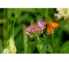 European Skipper on Red Clover Photographic Print