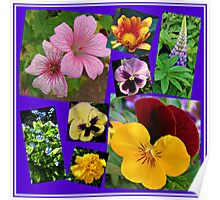 June Garden Flowers Collage Poster