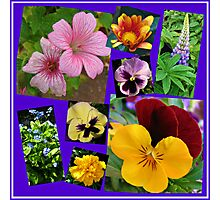 June Garden Flowers Collage Photographic Print
