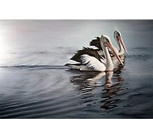 """In Respect of the Pelican"" Photographic Print"