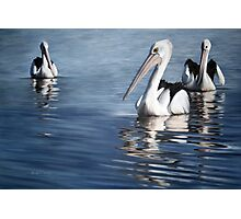 """In Respect of the Pelican II"" Photographic Print"