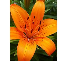 Simply Lily Photographic Print