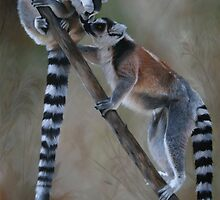 """In Respect of the Ring-tailed Lemur"" by Michelle Caitens"