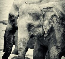 Images of Sri Lanka by Dilshara Hill