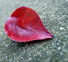 ... found my heart on the floor ... by Beautiful Amnesia