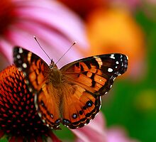 Painted Lady Delight by Brenda Burnett