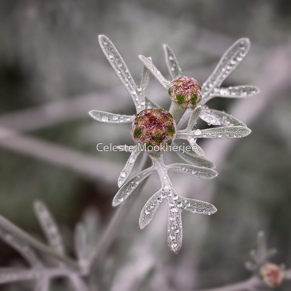 Ruby buds on silver by Celeste Mookherjee