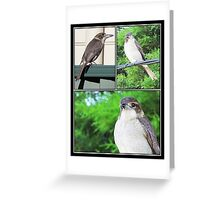 ~ Butcher Bird ~ Greeting Card