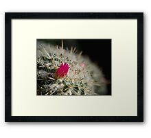 Pink flowering cactus Framed Print