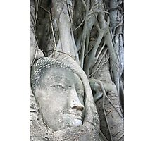 Buddha Head Photographic Print