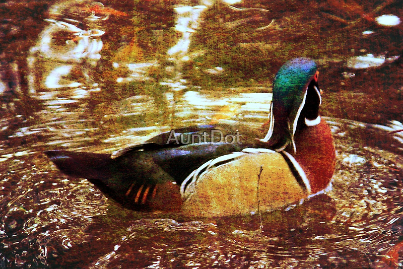 Wood Duck With Texture by AuntDot