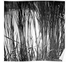 Reeds Reflected Poster