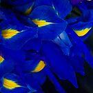 Blue is love? or love is Blue? by Kornrawiee