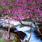 REDBUD ALONG LITTLE RIVER by Chuck Wickham