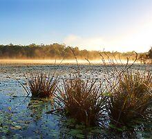 Misty Morning at Lake Kurwongbah by Stuart Cox