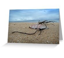 Shell on St. Leonards beach Greeting Card