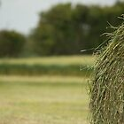 Hay bale  by stay-focussed