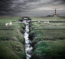 sheep by Mario Benz