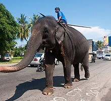 Working Elephant - Sri Lanka by Dilshara Hill