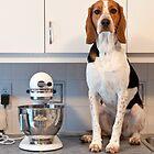 Floyd in the Kitchen by Darren Boucher