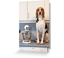 Floyd in the Kitchen Greeting Card