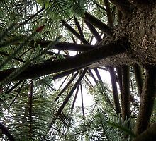 Norfolk Island Pine in Port Campbell by ShineArt