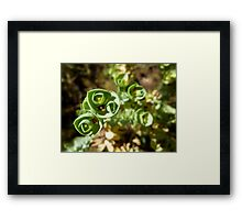 Plant by Campbells Creek, Port Campbell Framed Print