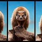 Mongoose by Simon Marsden