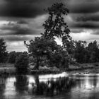 Claydon Lake by Ian Parry