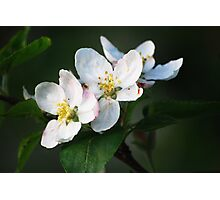 Blossom Time Photographic Print