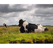 Landscape with 2 cows Photographic Print